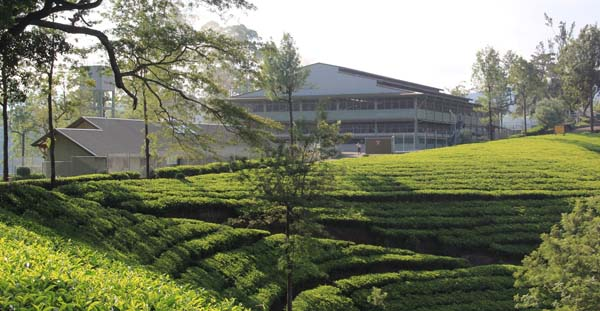tea plantation sector in sri lanka economics essay Of indian tea plantation sector delineating the trends in economic performance in  the  viz, china, india, sri lanka, kenya, indonesia and vietnam occupying.