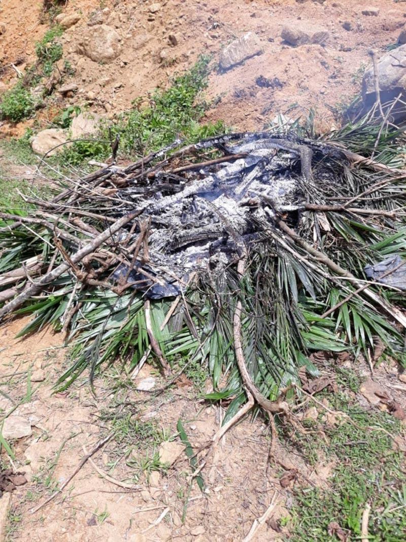 Burned-Oil-palm-seedlings-2