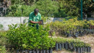Tokyo-Cement-Group-Forest-Tree-Plant-Nursery